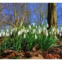 Najčešće proljetne tegobe
