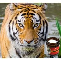 11 načina kako koristiti Tigrovu mast